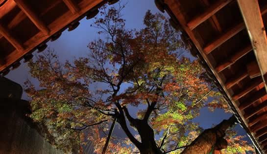 谷村美術館ライトアップ